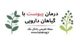 درمان-یبوست-با-گیاهان-دارویی