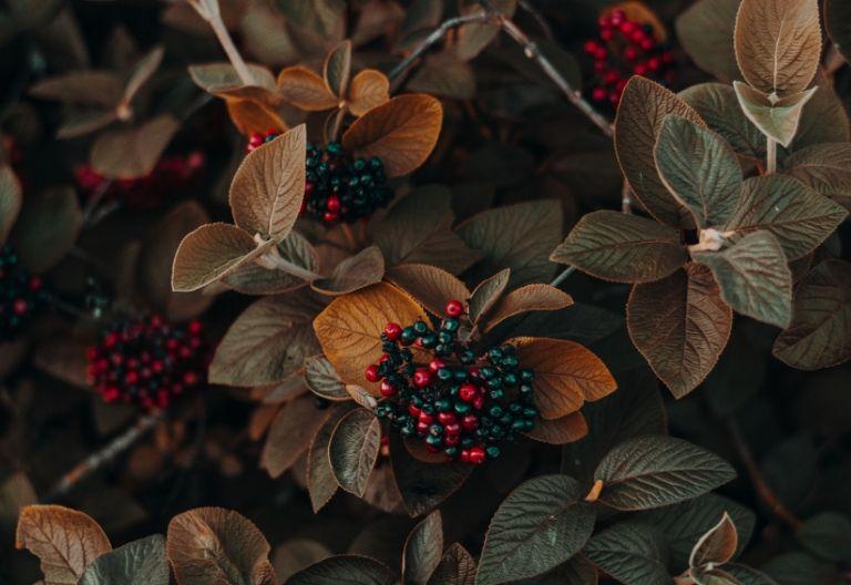 انواع برگ در پاییز