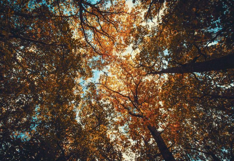 انواع برگ ها در پاییز