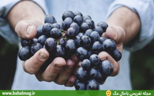 انگور سیاه تازه