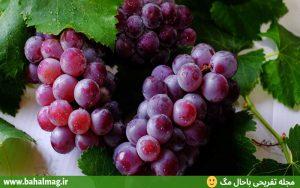 انگور میوه تابستانی