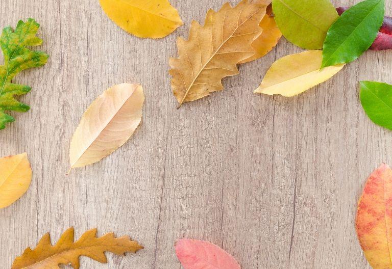 برگ رنگی زیبا در پاییز