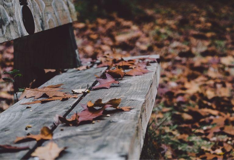 برگ روی صندلی پاییز