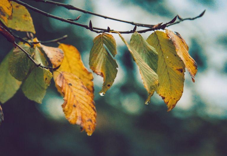 برگ سبز و زرد