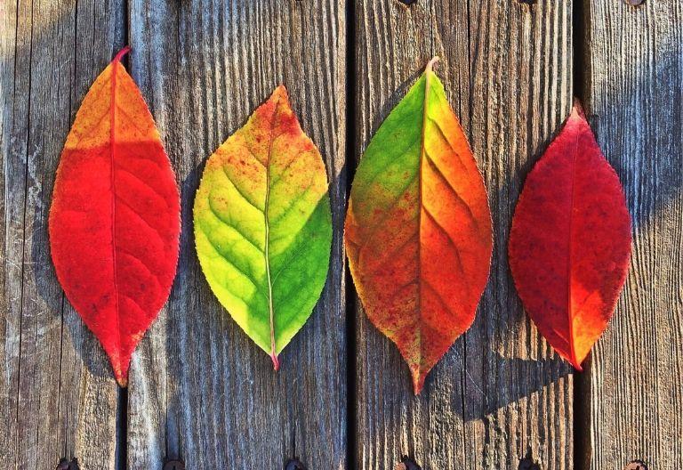 برگ های رنگی در پاییز