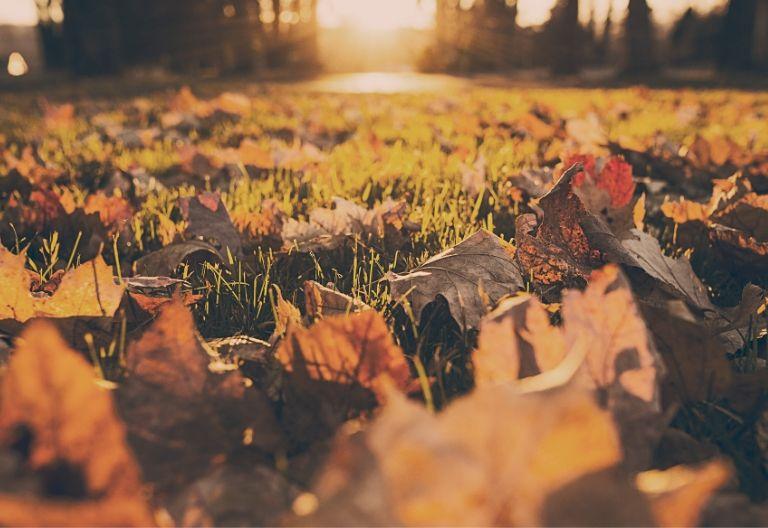تصویر زیبا از پاییز