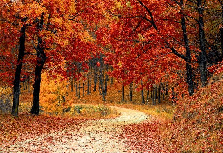 جاده در پاییز