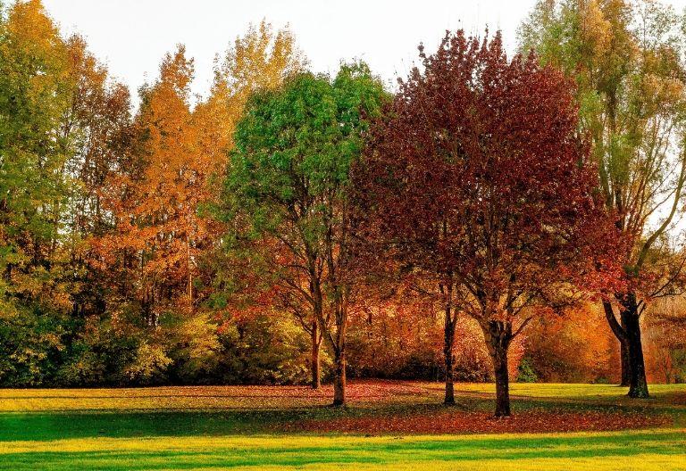 درختان مختلف در پاییز