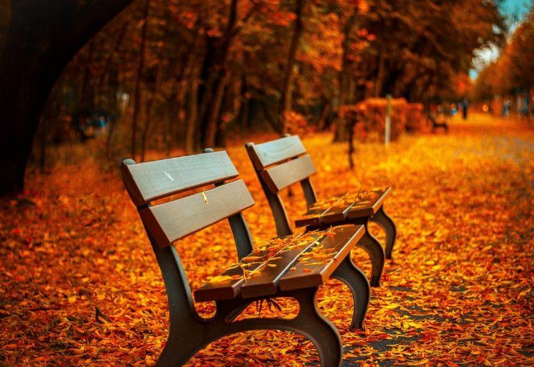 صندلی در پاییز
