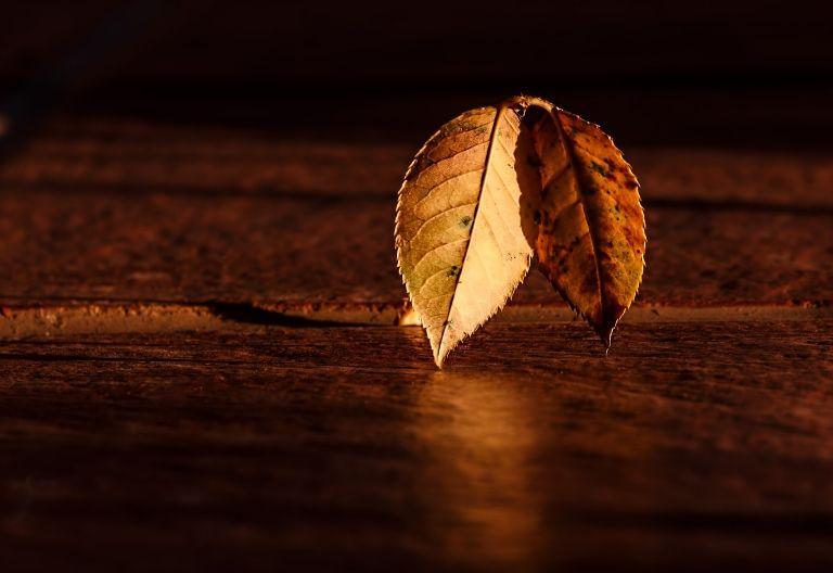 عکس زمینه برگ