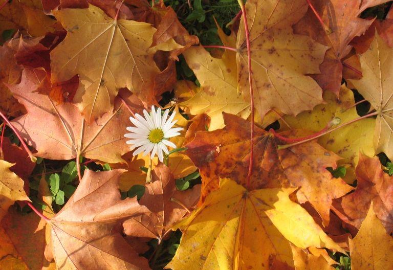 عکس زیبای گل در پاییز