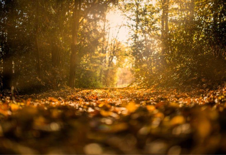 نمای زیبا از پاییز