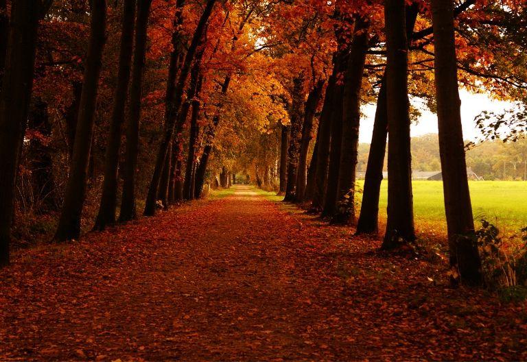 پاییز جذاب