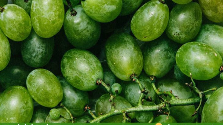 گلچین-تصاویر-میوه-های-تابستانی-انگور-۱