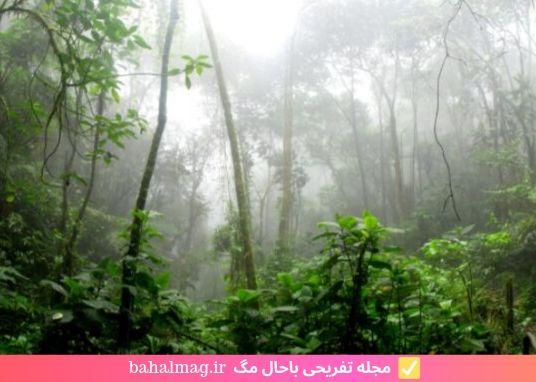 مه در جنگل