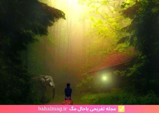 عکس مه در جنگل زیبای سبز