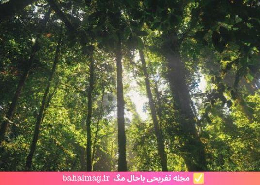 زیر نور آفتاب در جنگل