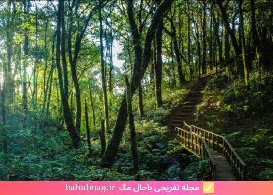 درختان متفاوت در جنگل