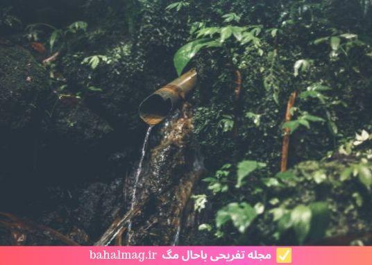 تصویر زیبا از جنگل