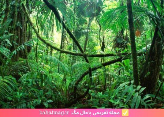 درختان زیبا در جنگل