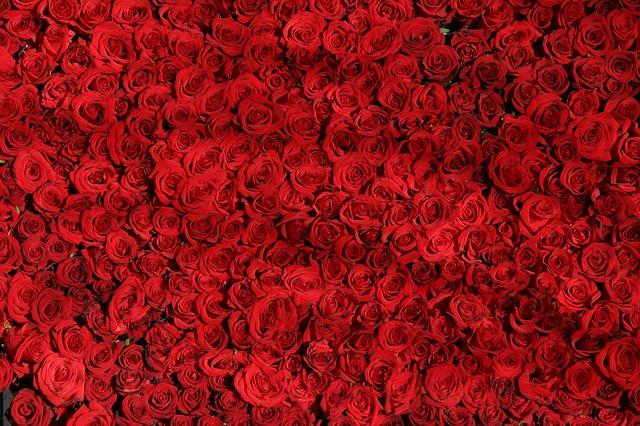 عکس گل های قرمز