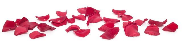 گل های زیبای قرمز