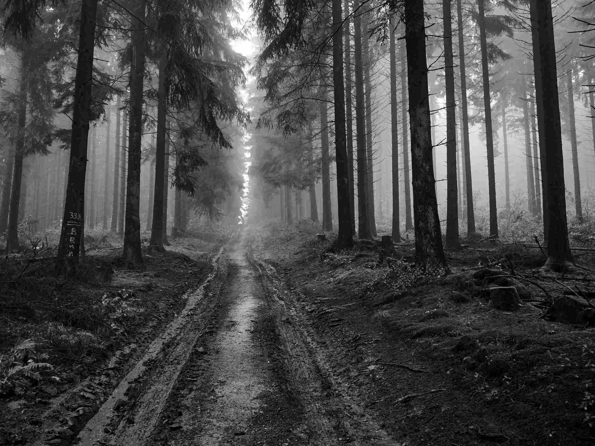 عکس زیبای دیدنی از منظره شیک رو به جنگل