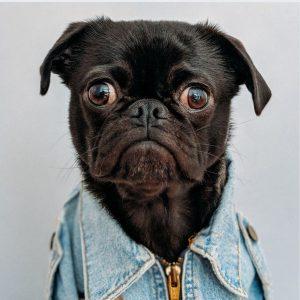 عکس پروفایل خنده دار از سگ