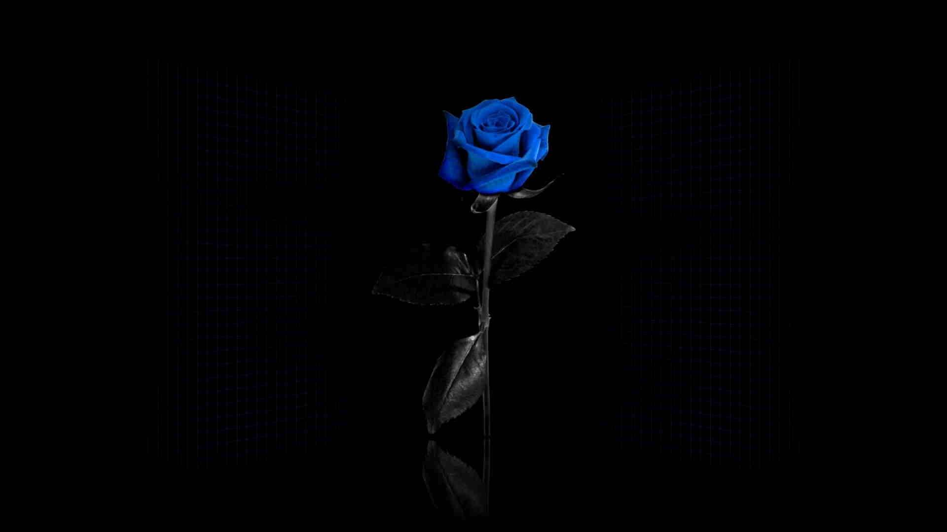 پروفایل گل آبی در محیط مشکی رنگ خاص
