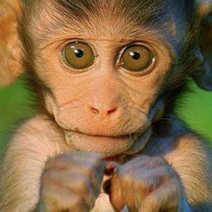 عکس پروفایل بچه میمون
