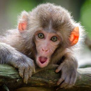 عکس پروفایل میمون خنده دار