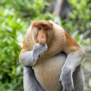 عکس پروفایل میمون دماغ دراز