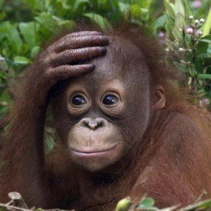 عکس پروفایل میمون ناز بامزه
