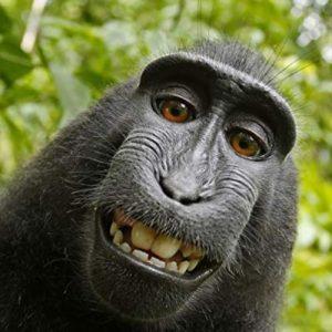 عکس پروفایل میمون