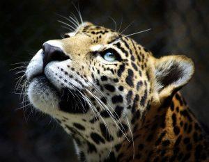 عکس پروفایل زیبا پلنگ