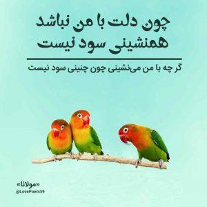 عکس نوشته شعر مولانا چون دلت با من نباشد همنشینی سود نیست