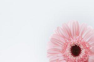 عکس پروفایل زمینه سفید با گل