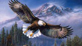 عکس پروفایل عقاب تیز بین