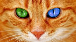 Cat Eye Colors – Why Cats Eyes Changing Colors? | Happy Cats Online